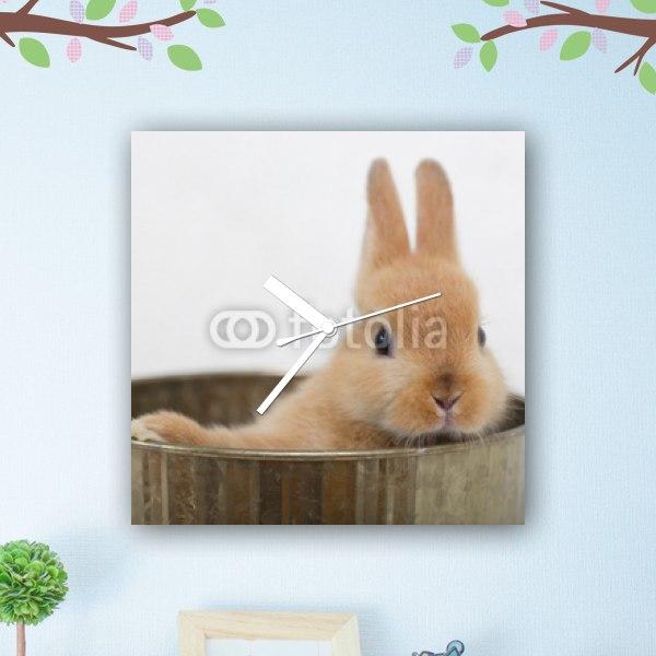 【掛け時計】茶色い子ウサギ