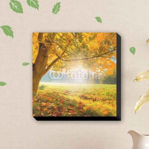 【キャンバスアート】美しい秋の木洩れ日