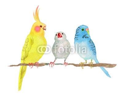 【インテリアシール】小鳥たちの集い ウォールステッカー