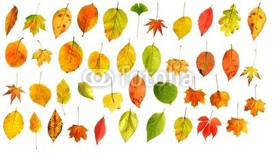 【インテリアシール】秋の落葉 壁シール