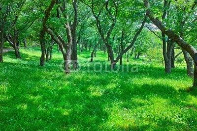 【インテリアシール】木漏れ日の新緑の森 ウォールステッカー