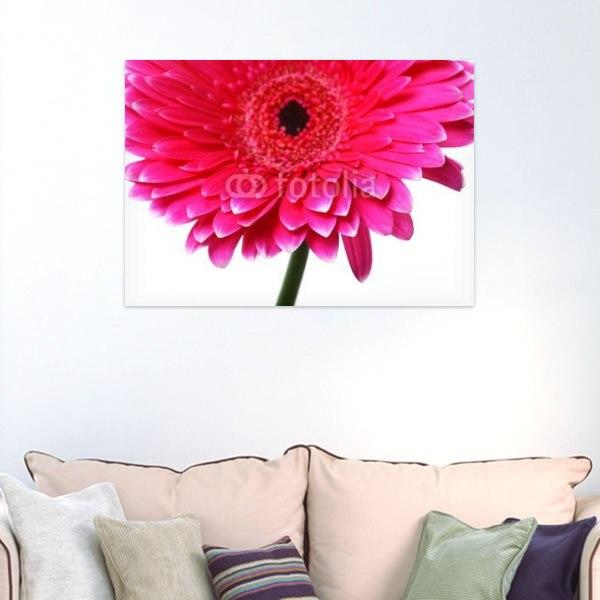 【インテリアポスター】ピンクのガーベラ