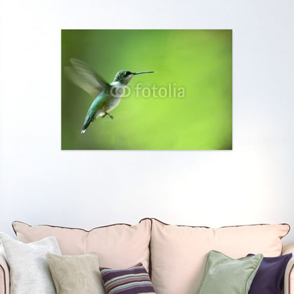 【インテリアポスター】飛び立つハチドリ
