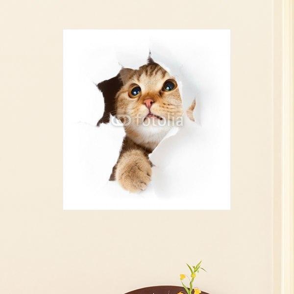 【インテリアポスター】遊びに夢中なキジトラねこちゃんポスター