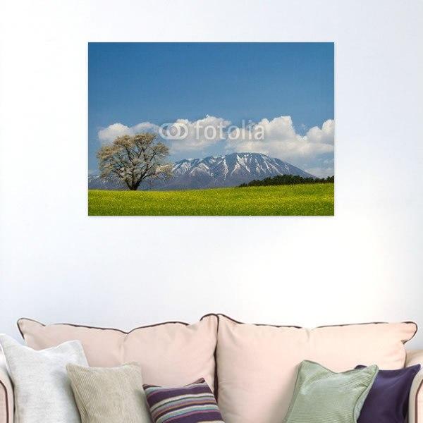 【インテリアポスター】菜の花畑に咲く一本桜と岩手山