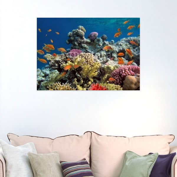 【インテリアポスター】サンゴと熱帯魚
