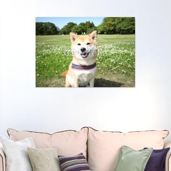 【インテリアポスター】柴犬とシロツメクサの草原ポスター
