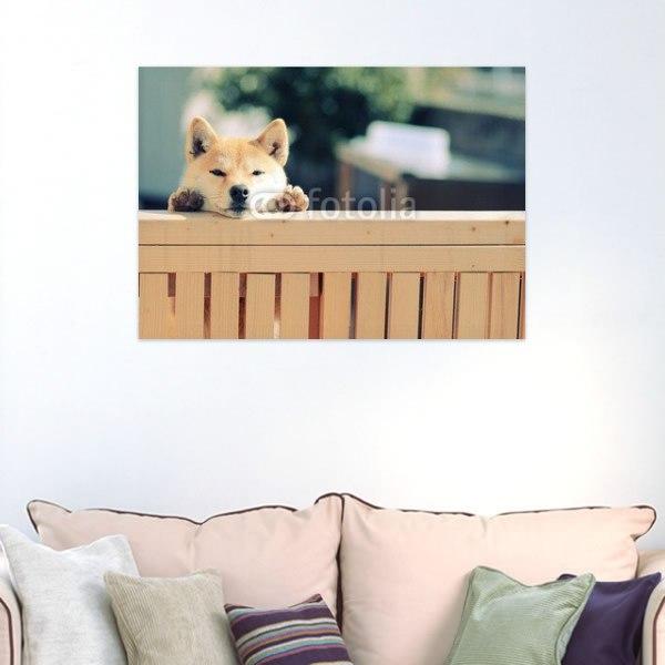 【インテリアポスター】お外をのぞく柴犬ポスター