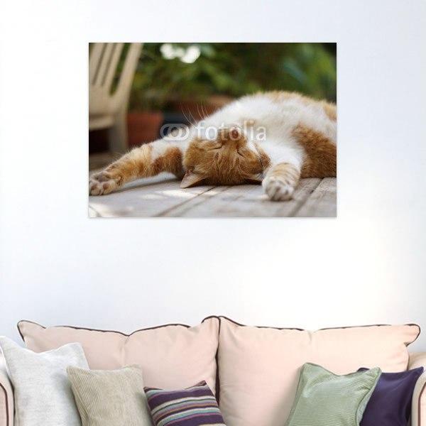 【インテリアポスター】寝転がる茶猫ポスター