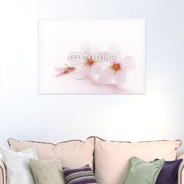 【インテリアポスター】可憐な桜の花びら