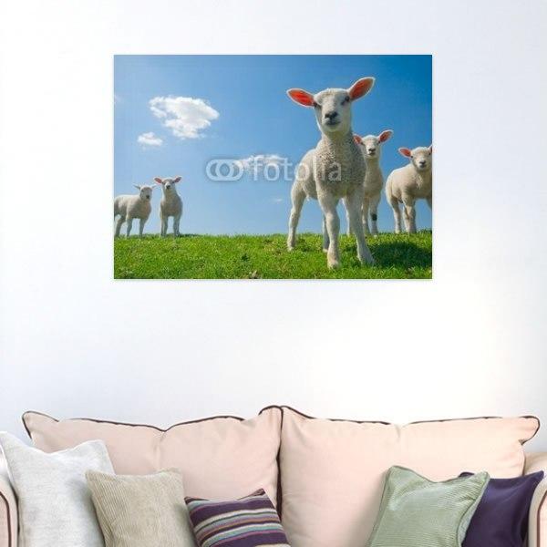 【インテリアポスター】草原の羊