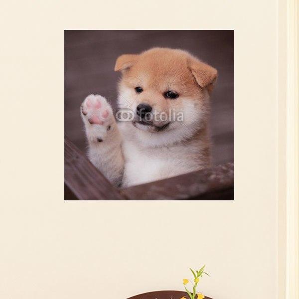 【インテリアポスター】返事をする柴犬ポスター