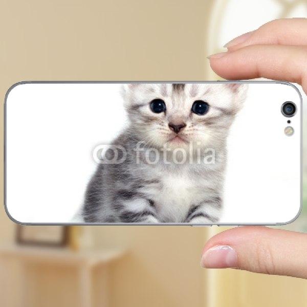 【スキンシール】iPhone 6 アメリカンショートヘアの子猫