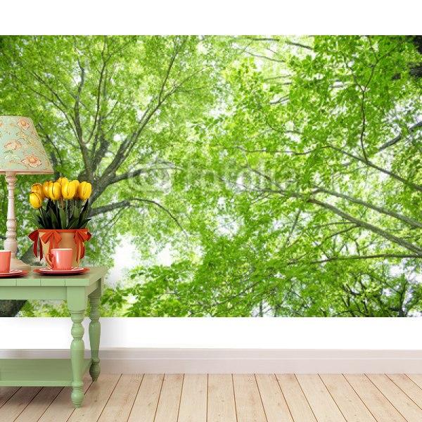 【壁紙】巨木の木漏れ日はがせる壁紙