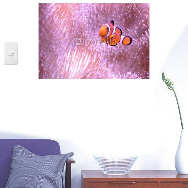 【インテリアシール】珊瑚の中の魚 壁シール